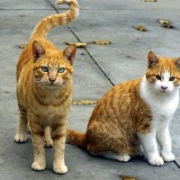 Busy cat walking business